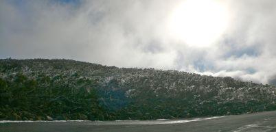 Frozen forest in winter