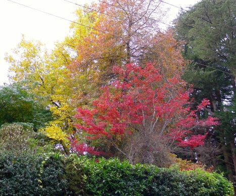 What we can to see - autumn colours!