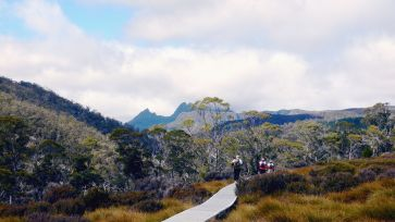 Cradle Mountain from Cradle Valley Boardwalk