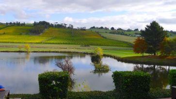 Josef Chromy vineyards