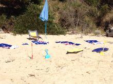 Australia Day at the beach