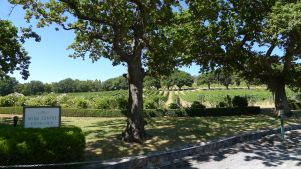 Vines at Pipers Brook / 9th Island Cellar Door