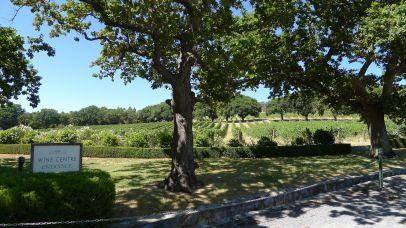 Vines at Pipers Brook / 9th Island Cellar Door