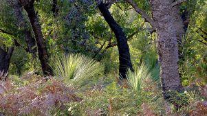 Banksia, grasstress & brakenfern