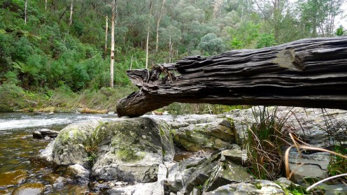 Log weathered by floods