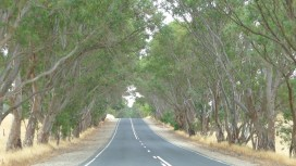 Trees lining the roadside