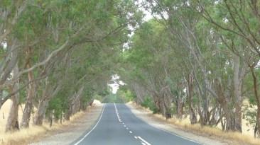 Trees lining the roadside