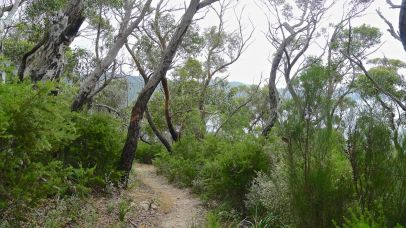 4/15 The vegetation has changed slightly again, but the path is still clear and good