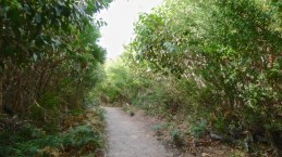 The path behind Norman Beach is shaded in the afternoon