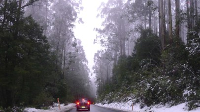 Driving out through the mist