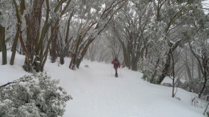 Snowshoeing through snow and ice covered snow gums is magical