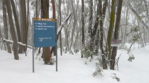 Trail sign (left) and Sled Tour caution sign (right)