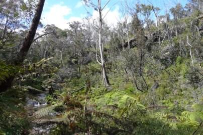 Above Katoomba Falls