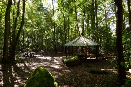 An unexpected but lovely picnic area in Leura Forest
