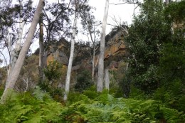Looking up at the cliffs of the Narrowneck Plateau