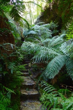 My dream backyard includes a ferny gully just like this