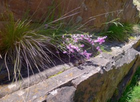 Plants take advantage of the sheltered ledges on the ridge line to take root and grow