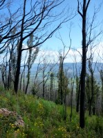 Sep 2010 - Spring blooms after the devastating Marysville-Kinglake fires the previous summer