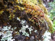 Bryophtyes and maybe lichen on a rock add splashes of colour to the green