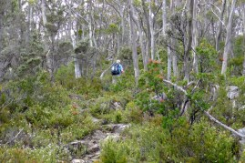 It's not particularly steep, but it is a steady climb amid the summer flowering plants