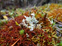 Lichens (& bryophytes?) in fantastic colours