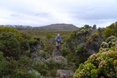 Mt Field lies directly ahead, across Windy Moor