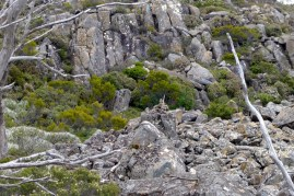 The cairns marking the route up to the summit are not immediately obvious