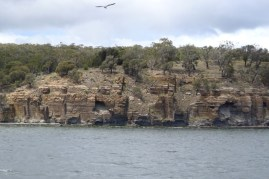 The cliffs on the north side of the Derwent River are quite crumbly and full of caves