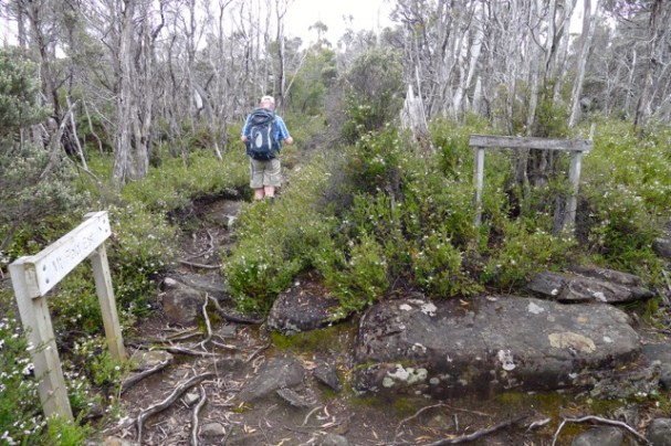 Track junction - Stephen is on the track to Mt Field East, to the right is Seagers Lookout
