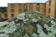 The lichens here are fantastic, but erode the sandstone - behind the Penitentiary, Port Arthur