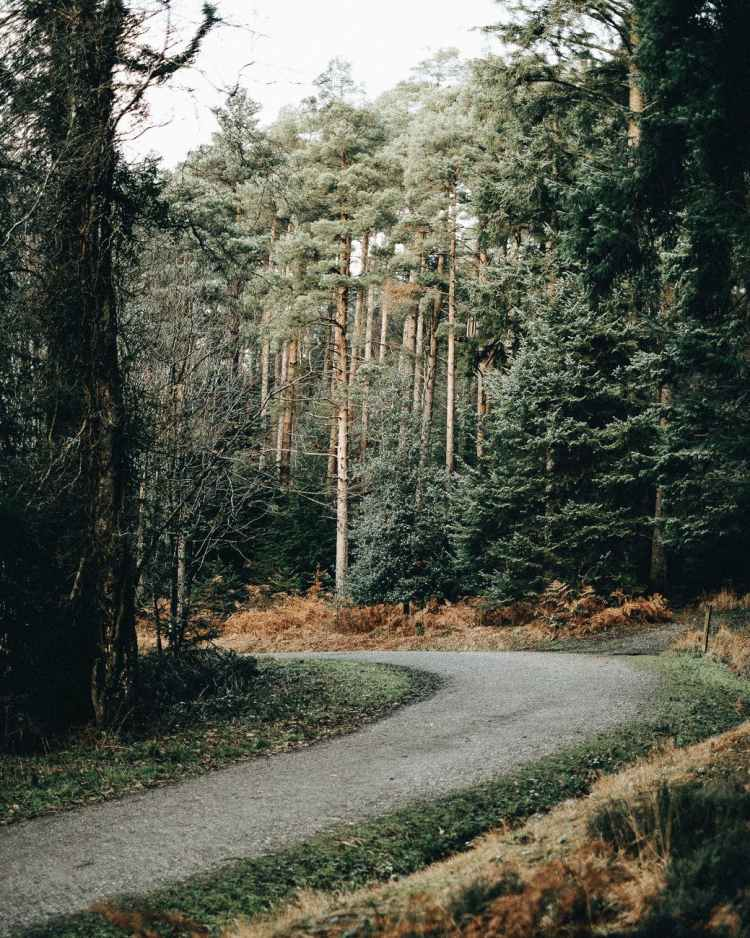 empty road placed in green forest in daytime