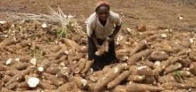 Image result for CASSAVA FARMERS NIGERIA