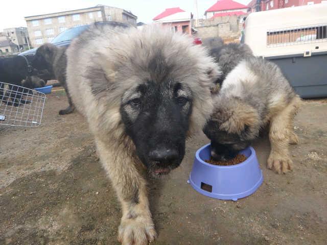 DOG BREEDING BUSINESS PLAN IN NIGERIA