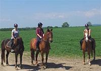 doyles equestrian centre
