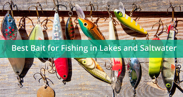 Best Bait for Fishing in Lakes and Saltwater