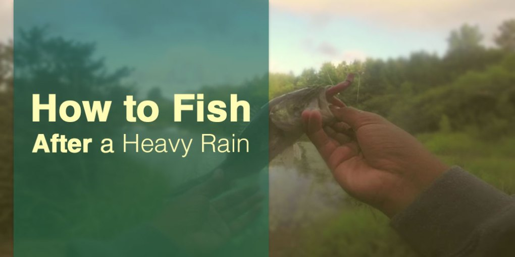 How to Fish After Heavy Rain