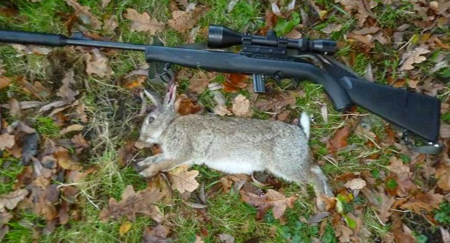 How to Hunt Rabbits with a 22