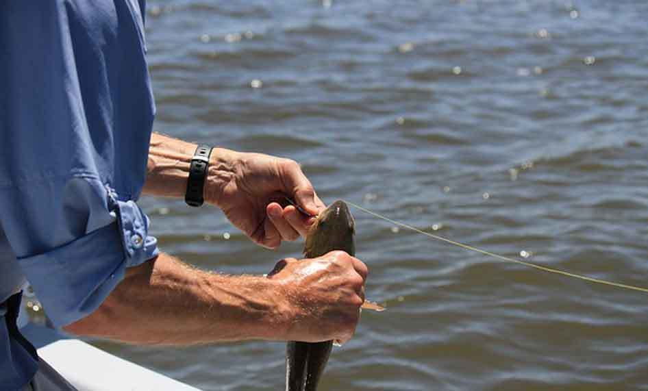 How to Choose the Best Bass Fishing Line