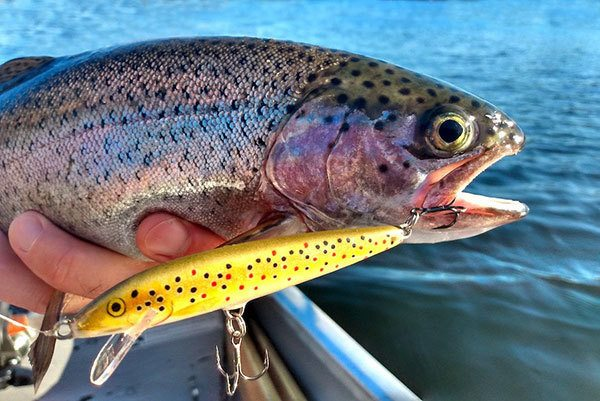 Best Season for Trout Fishing with Trolling