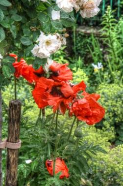 Monets Garden 8
