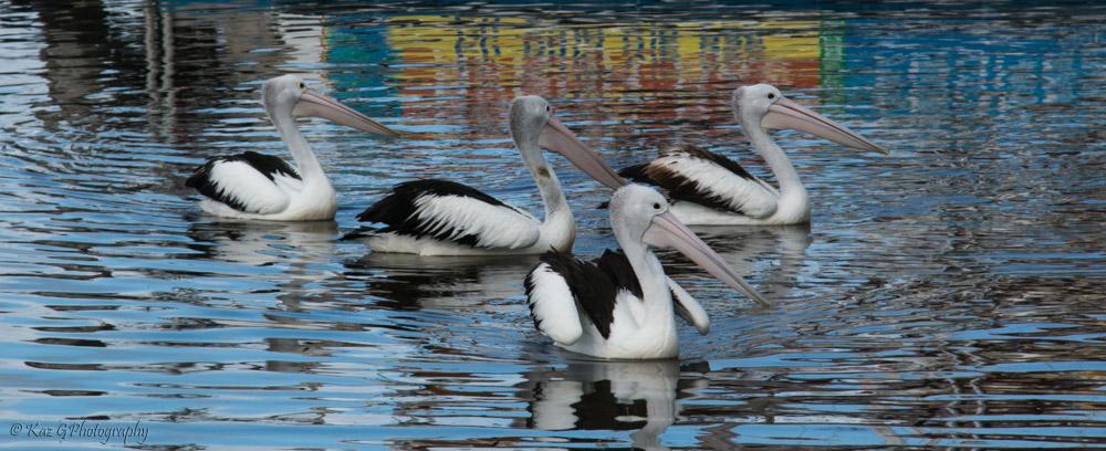 Pelicans-on-Brunswick