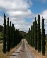 road-to-winery-mclaren-vale