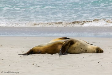 seals seal bay