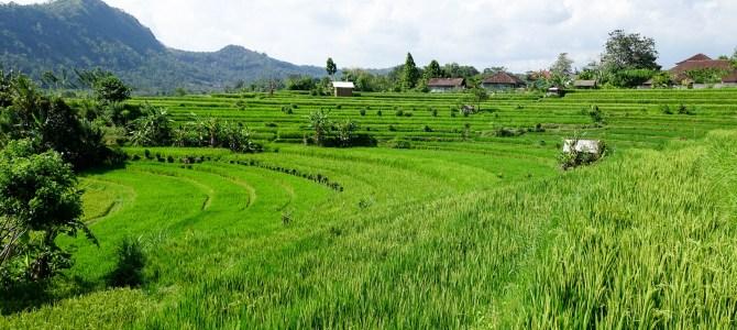 Bali – Sidemen & Amed: Paradies inmitten von Reisterassen  & Wrack-Tauchen
