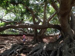 three boys near big trees
