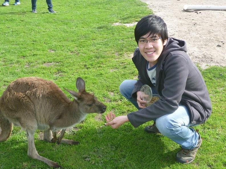 Kangaroo feeding on the Penguin Parade Tour