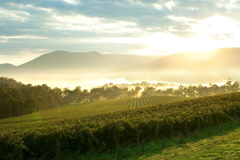 Melbourne day trips - Yarra Valley Winery