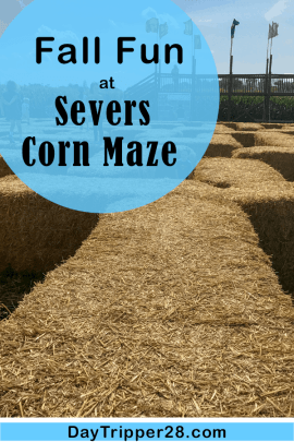 Fall fun at severs corn maze in the Twin Cities. The best Corn Maze you'll find! Family | Corn Pit | Minneapolis | Shakopee