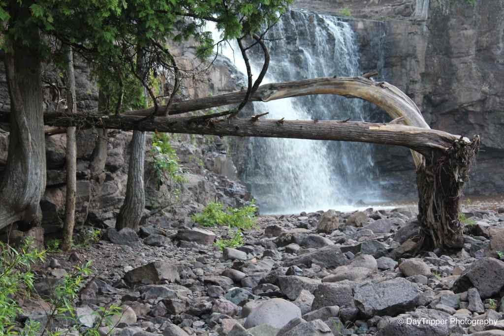 Broken Tree at Gooseberry Falls