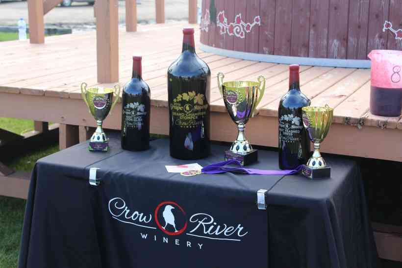 Trophies at the Grape Stomp at Crow River Winery in Hutchinson MN.